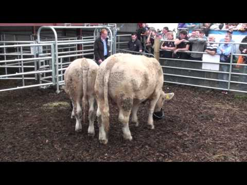 """Sustainable Livestock Demonstration"" by the Farmers Journal Livestock team"