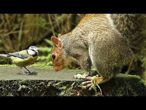 Sounds for Dogs : Forest Birds and Squirrels - Dog TV