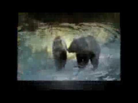 Тварини Північної Америки