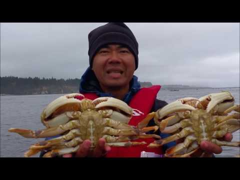 oregon coast crabbing catching giant dungeness crab
