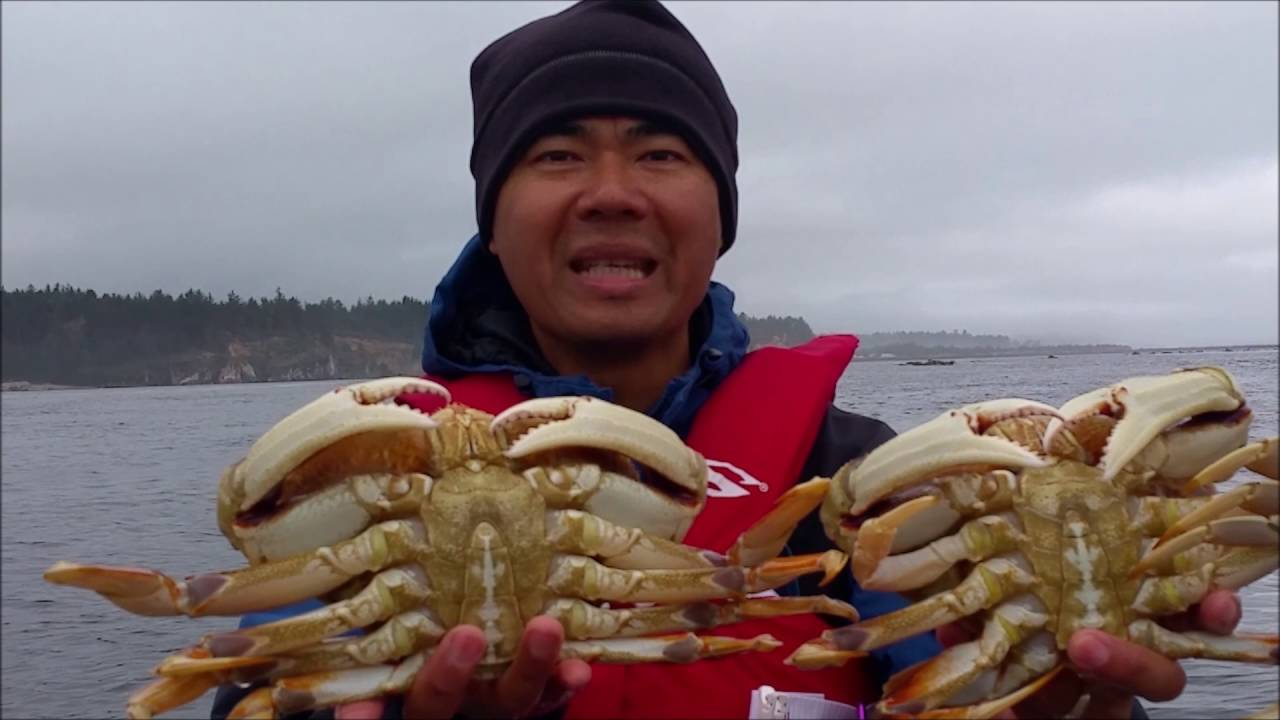 oregon coast crabbing catching giant dungeness crab - YouTube
