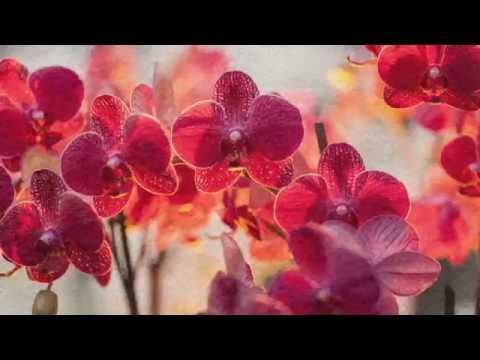 top 10 les plus belles fleurs du monde. Black Bedroom Furniture Sets. Home Design Ideas