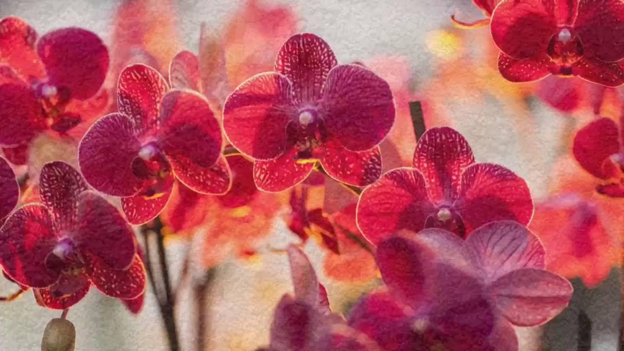 2 top 10 des plus belles fleurs du monde youtube for Les plus belles plantes artificielles