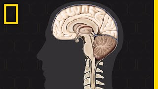 National Geographic: The Brain thumbnail