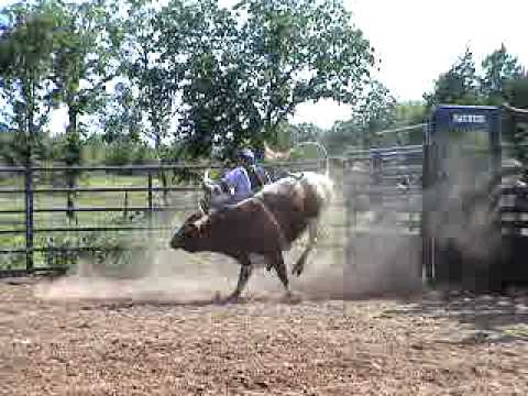 3yr Old Bull, 704 Ugly Kid Joe, Ferguson Bucking Bulls