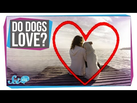Does Your Dog Love You?