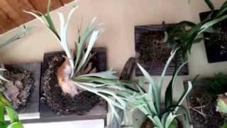 My staghorn fern tropical forest bathroom idea! Rain forest bathroom.