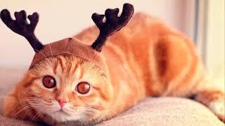 Рыжий кот.  Веселая детская песенка.