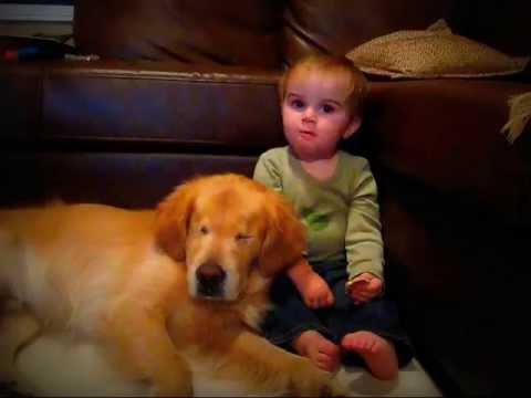 Blind Dog Cuddling with Shepherd