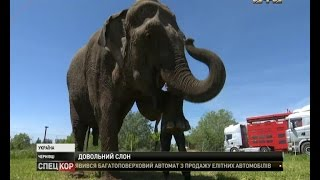 Як у Чернівцях на автомийці мили слона