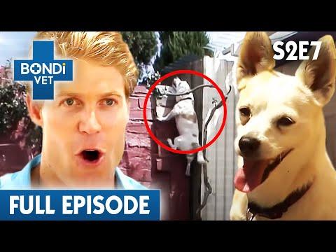 Kitten Is Not Active   S02E07   Bondi Vet