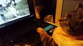 Кошечка Василиса  смотрит фильм