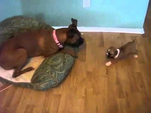 Зоофилы мужики трахают собак