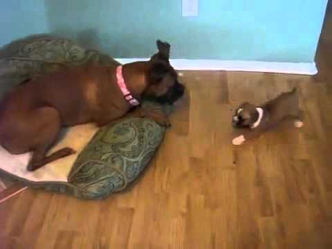 Funny sex dog xxx girl thumbnail