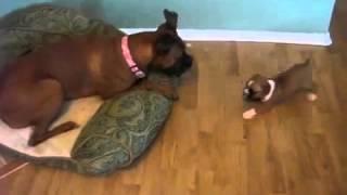 vuclip Funny sex dog xxx girl