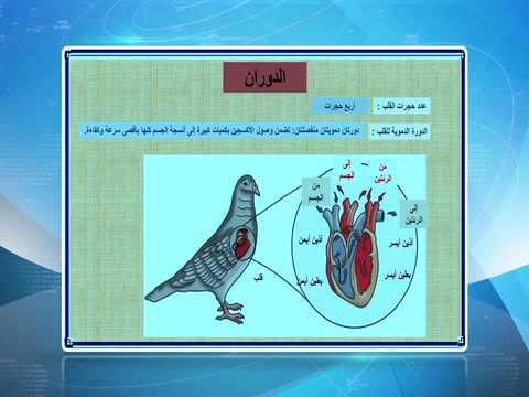 مادة الاحياء -الحلقة اثالثة عشر الفصل الدراسي الثاني ( الطيور) الصف العاشر