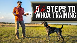 The Complete Guide To Whoa Training  Every Single Step