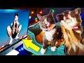 ЧТО ЕСЛИ СОБАКЕ и КОШКЕ показать клипы Марьяна Ро МЕГА ЗВЕЗДА и другие РЕАКЦИЯ ПИТОМЦЕВ Magic Family mp3