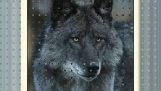 Medicine Power   Sacred Spirit   The Wolf