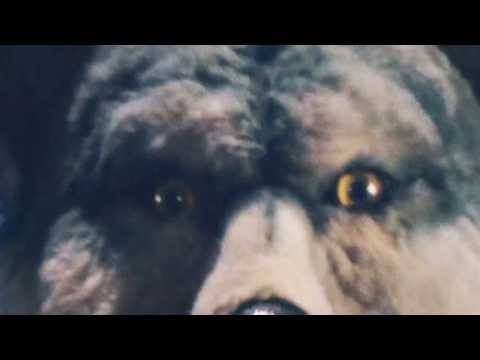 MAN WITH A MISSION - SURVIVOR (Best Live Concert Opening MWAM 2016)