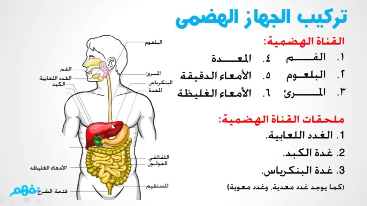 صور لجسم الانسان جسم الانسان