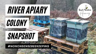 RIVER APIARY SNAPSHOT - 9 COLONY WINTER INSPECTION