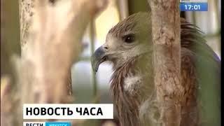 Министерство культуры и архивов России разработало требования к использованию животных в культурно з