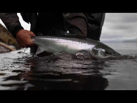 INSANE SALMON FISHING // Daniel Holm fishing West Ranga - Pipe Media