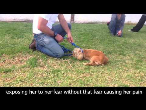 Fearful Touch Sensitive Dog Behavior Modification