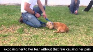 Fearful Touch Sensitive Dog Behavior Modification
