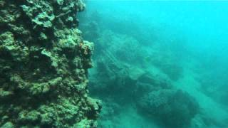 What Lurks Beneath - Fremantle Wharf : Part 1