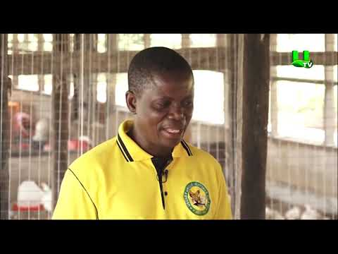 AYEKOO: Starting poultry farming business in Ghana (PART 2)