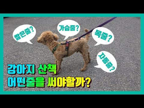 강아지 산책 어떤줄을 써야할까? 목줄 가슴줄 자동줄?