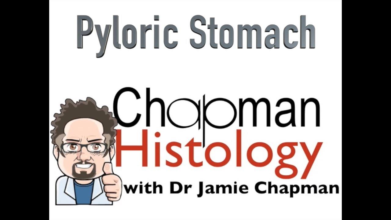 pylorus szag a szájból
