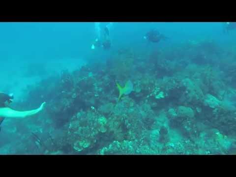 Stuart Cove Nassau Bahamas-Mike's Reef Dive Site