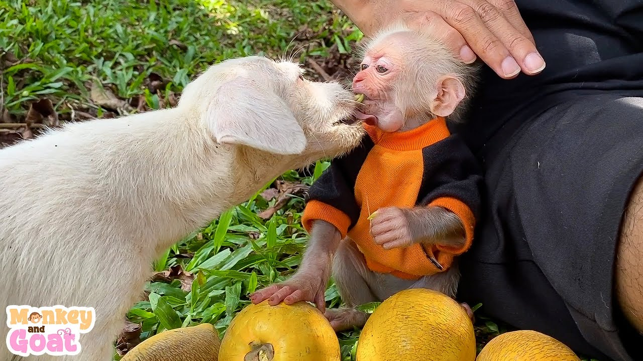 Cute baby monkey playing with puppy