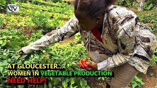 Women Gardeners At Gloucester Sierra Leone Need Urgent Boost To Stay Economically Afloat