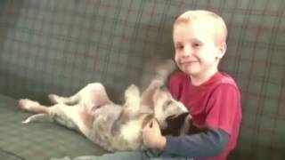 police state 6 year old boy suspended from school for kissing a girl on the hand
