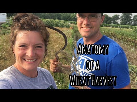 Anatomy of a Wheat Harvest | Front Porch Catholic