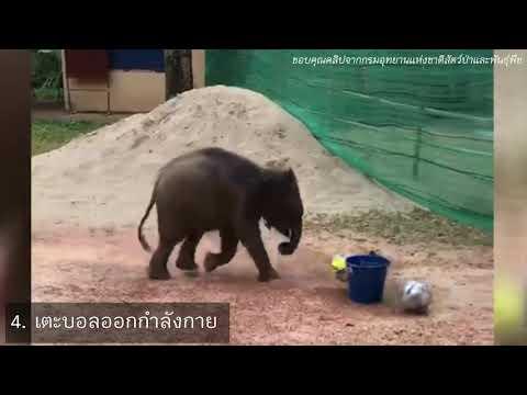 """ชม """"10 โมเมนต์สุดน่ารัก"""" ของ """"ชบาแก้ว"""" ช้างป่าขวัญใจคนไทย"""