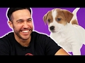 Fall Out Boy Plays With Puppies While Answering Fan Questions