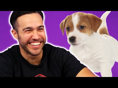 Fall Out Boy Plays With Puppies While Answering  Questions