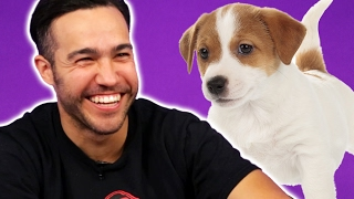 Fall Out Boy Plays With Puppies (While Answering Fan Questions)