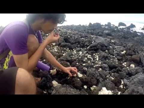 Native Samoan Boy Eating Raw Urchin at Makalawena beach