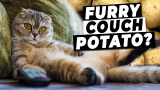 How To Fix A Lazy Cat (Tips For Keeping Your Cat Active!)