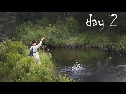 Finding Wild Rainbow Trout In Michigan Streams