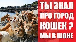 Бурса - кошачий рай, уличных кошек. Смешные видео, смотреть лучшие приколы 2017. Rukzak