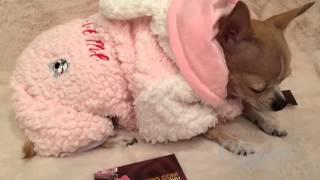 Костюм для собак - «Заяц плюшевый» купить в интернет магазине одежды для собак VIP-DOG.COM