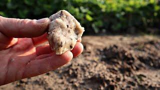 Удобрение под посадку лука озимого от которого головки разрывают грядку!