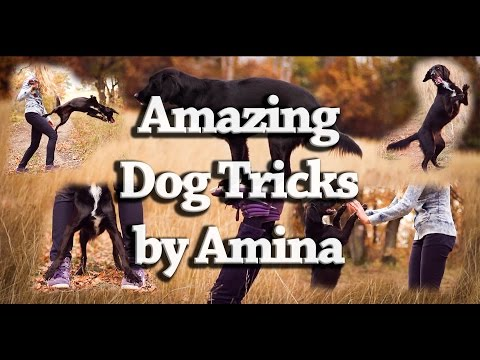 AMAZING Dog tricks by Amina - 2,5 years